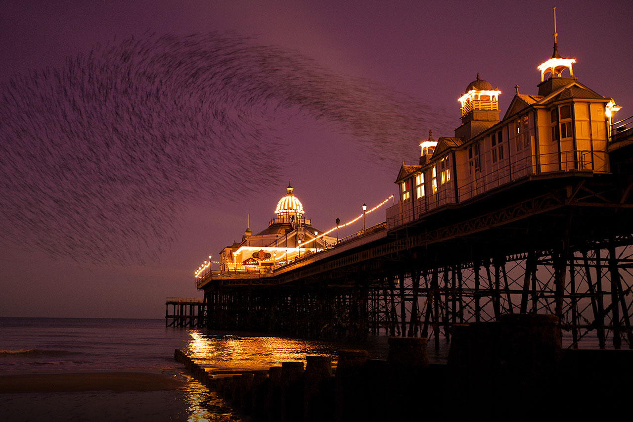 eastbourne pier starlings