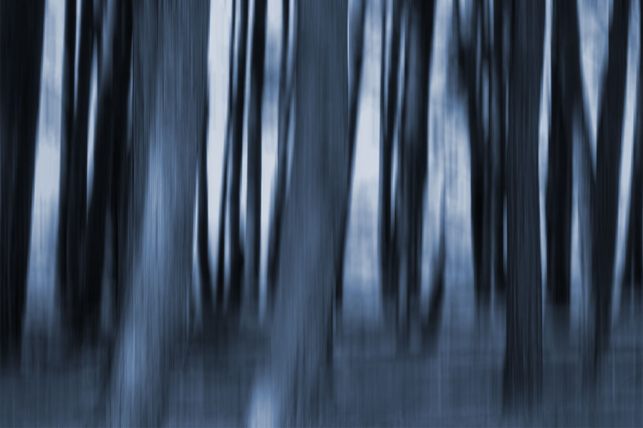 ashdown forest icm